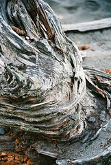 11 (Keegan Keene) Tags: blue film beach canon photography lomo lomography sand waves logs driftwood barnacles 650