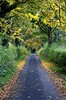 NO RETURN (simongavin83) Tags: road autumn trees fall leaves lines tarmac leaf line hedge straight autumnal hedges hedging nikond5100