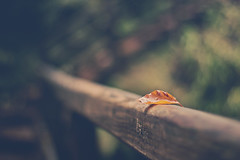 Perched (Grace5mith) Tags: wood autumn trees ireland orange green leaves fence leaf branch bokeh steps northernireland glenariff waterfoot