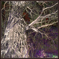 Autumn Tree Negative (Tim Noonan) Tags: white colour tree green texture nature digital photoshop dark grey october mood surrealism branches violet manipulation negative mosca hypothetical vividimagination greenscene shockofthenew stickybeak sharingart maxfudge awardtree maxfudgeawardandexcellencegroup exoticimage netartii vividnationexcellencegroup