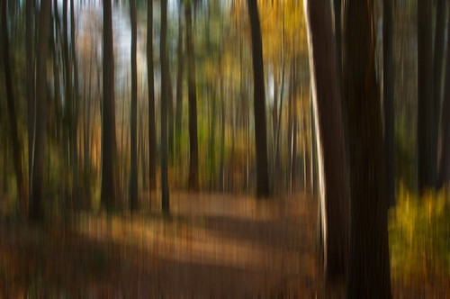 Autumn Blur 2