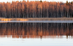 Border of a forest (Antti Tassberg) Tags: wood autumn sunset lake reflection tree fall forest espoo finland landscape europe shoreline eu 100mm autumncolors scandinavia puu mets syksy jrvi auringonlasku uusimaa ruska pitkjrvi laaksolahti metsnreuna borderofaforest jrvenper kolkekangas ranraviiva vedenraja