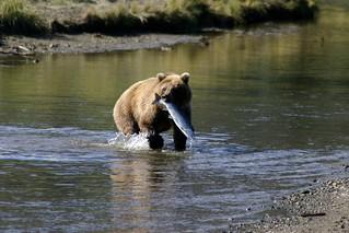 Alaska Kenai River Fishing and Saltwater 16