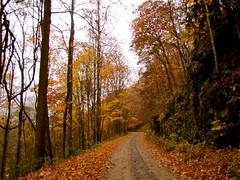 Pisgah National Forest (jeffgunn) Tags: autumn mountain fall nature october asheville northcarolina 2012