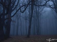 (alejandrordd) Tags: blue españa brown tree musgo rio azul river hojas arbol gris europa sierra pico otoño monte montaña marron niebla avila castillayleon