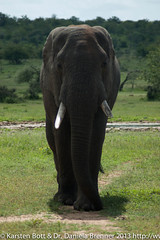 """Elephant • <a style=""""font-size:0.8em;"""" href=""""http://www.flickr.com/photos/56545707@N05/8364360343/"""" target=""""_blank"""">View on Flickr</a>"""