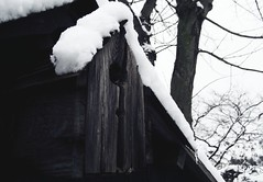 Snow (joewithers) Tags: snow macro tree ice nature fuji britain birdhouse icicle fujifilm british s700 s5700