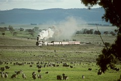"""The Last Train to Cooma"". RTM's 5910 Climbs towards Mt Fairy from Butmaroo,  ARHS Tour, Cooma Branch, NSW, 28th May, 1989. (garratt3) Tags: aus film rail railroad steam takumar train pentax railtransportmuseum standardgauge arhs coomabranch nswheritage steamloco railway railways trains locomotive australia kodachrome nswrtm railfan steamlocomotive steampower nswgr"
