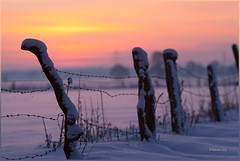Winter (KarlaK62...off) Tags: schnee winter sunset red snow rot yellow fence mood sonnenuntergang gelb zaun barbed stimmung stacheldraht