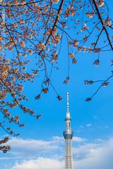 Tokyo Sky Tree / Tokyo, Japan (yameme) Tags: travel japan canon eos tokyo  sakura cherryblossoms        skytree 24105mmlis 5dmarkii 5d2