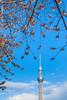 庫存櫻景 Tokyo Sky Tree / Tokyo, Japan (yameme) Tags: travel japan canon eos tokyo 日本 sakura cherryblossoms 東京 花 旅行 櫻花 櫻 隅田川 隅田公園 skytree 24105mmlis 5dmarkii 5d2 東京晴空塔