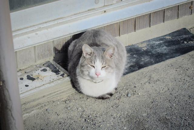 Today's Cat@2013-01-27