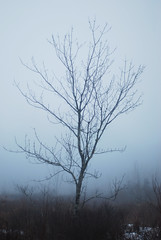 for the love of fog (thisemily) Tags: winter fog pond january newhampshire bog 50mmf18 bearbrookstatepark