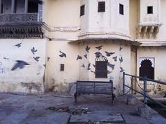 India // Rajasthan 2012-11-02