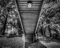 Under A Walking Bridge (that_damn_duck) Tags: walkingbridge bridge trees shadows bw blackwhite