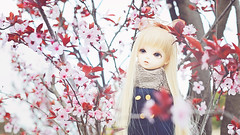 i could even learn how to love like you (rainwaltz) Tags: bjd doll bluefairy tf tiny fairy may songofsongs songofmay sakura nature cherryblossoms flowers