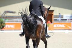 IMG_7637 (dreiwn) Tags: dressage dressur dressuur pferd reitturnier turnierreiten pferdesport horse horseback horseriding equestrian reitverein dressurprfung kandare doublebridle reiten pferde reitplatz ridingarena
