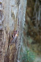 Grillo mimetizzato (Alessandro Casagrande Photographer) Tags: grillo macro animale verde tronco corteccia folgaria sentiero canon