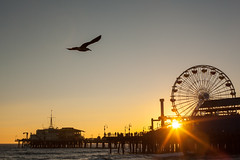 California Sun (Geraint Rowland Photography) Tags: sunset settingsun sunsetphotographygreatrowland pier seaside ocean waves water funfair rides bird flight nature canon santamonica california unitesstatesofamerica geraintrowlandphotography 50mmphotography sky beautiful