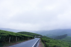 The never ending road (Sujith Ninan) Tags: travel photography sony sonya6000 35mm 16mm kerala india munnar landscapes monsoon vsco asia friends digital flower sky tree green mountians portrait family roadtrip road car bw new me