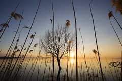 Thin air (Galep Iccar) Tags: sunset sun sole tramonto landscape paesaggi paesaggio flickr tree water trip outside