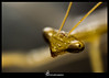 Green Locust [ Macro ] . (YasserPito) Tags: macro photography love green locust blury background eyes insects insect canon power