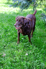 Cocoa (Bhlubarber) Tags: alberta carvel family holiday parkland prairies summer chill
