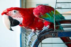 Hello! (petia.balabanova(tnx for +1.500.000 views)) Tags: animal bird parrot colours eye nikond800 1735mm travel summer malta