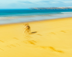 Lets refresh at the sea! (Marcel Weichert) Tags: algarve alvor atlanticocean beach dog europe landscape mar ocean oceanoatlântico portugal sea summer wave faro pt