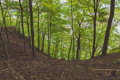 Frontenac State Park - Upper Bluff Trail (Tony Webster) Tags: frontenac frontenacstatepark lakepepin minnesota mississippiriver upperblufftrail autumn forest hiking hikingtrail nature river statepark trail unitedstates us