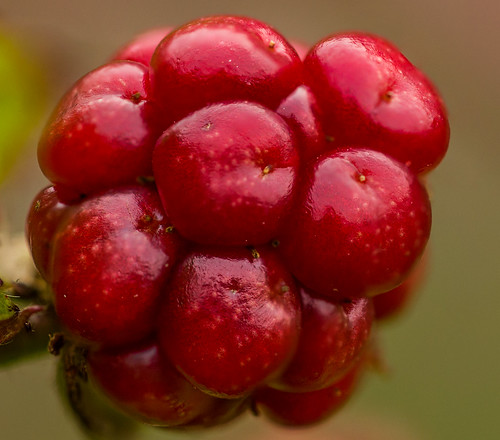 Unripe blackberry