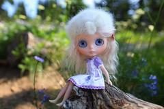 Baby wishes to pick a bouquet (jessi.bryan) Tags: trip camping washington doll blythe gbaby customblythe mohairblythe wingsinflight sunrisewashington pinkpetalberet gbabycustom