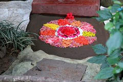 Pookolam - 10 days to Onam (chocolatecoffeecream) Tags: flowers india onam rangoli pookolam lpcolourful