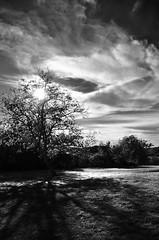 Evening (Tinina67) Tags: autumn france tree fall herbst walnut tina gers seissan tinina67 aumarron