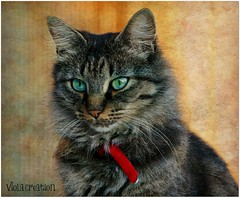 Lucy  (Viola & Cats =^..^=) Tags: cats pets texture animals felini felines gatti animali natureselegantshots bestcapturesaoi elitegalleryaoi mygearandme mygearandmepremium mygearandmebronze mygearandmesilver mygearandmegold mygearandmeplatinum mygearandmediamond highqualityanimals rememberthatmomentlevel4 rememberthatmomentlevel1 rememberthatmomentlevel2 rememberthatmomentlevel3 rememberthatmomentlevel7 rememberthatmomentlevel9 rememberthatmomentlevel5 rememberthatmomentlevel6 rememberthatmomentlevel8 rememberthatmomentlevel10