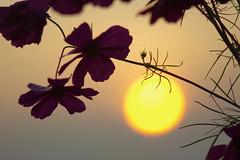 Il Giardino Del Sole - Sun's Garden (G.Sartori.510) Tags: top20sunsetsofourhearts