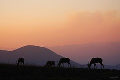 Malolotja mountains (adour garonne) Tags: africa park light mountain nature night montagne southafrica sundown nuit swaziland naturepark antilope afrique malolotja afriquedusud blessbok malolotjanaturereserve