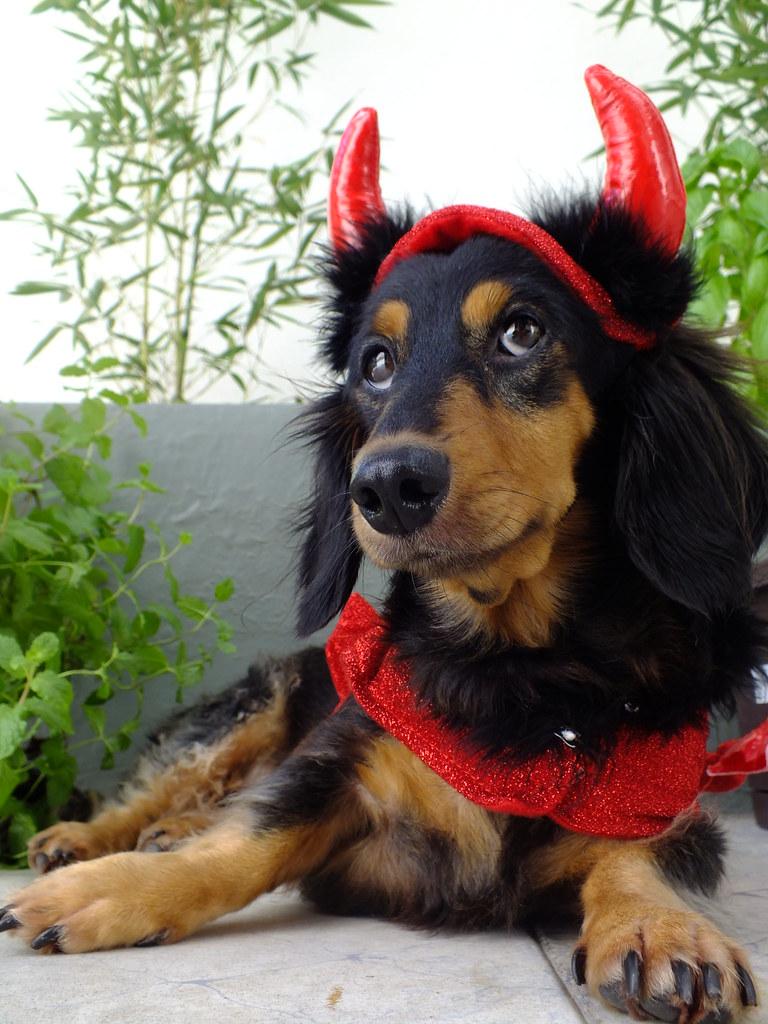 weiner dog halloween costumes & boo halloween baseball dog cap sc 1