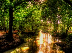 """Sunlight On A Stream"" (Galeyo) Tags: trees countryside stream me2youphotographylevel1"