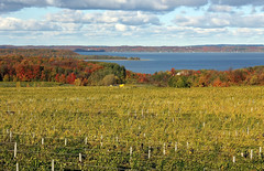 Autumn at West Grand Traverse Bay (jannagal) Tags: autumn fall water vines wine michigan fallcolors lakemichigan greatlakes winery autumncolors grapes traversecity vinyard westbay grandtraversebay oldmissionpeninsula canon60d jannagal jannagalski