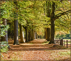 My favorite Autumn Lane (Bert Kaufmann) Tags: autumn oktober holland netherlands herbst herfst nederland autumnleaves lan pasture lane paysbas depth hdr olanda roermond weiland sunnyday herfstkleuren limburg niederlande diepte zonnig laantje herfstdag herfstbladeren verdwijnpunt swalmen hillenraad middenlimburg boukoul maasniel zonnigedag kasteelhillenraad boekoel