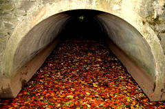 Blind Wading (Gareth Priest) Tags: uk autumn light inspiration fall nature water leaves wales river dark landscape flow canal waterfall nikon stream experimental colours natural pipe perspective creative cardiff surreal tunnel eerie spooky leafs d5100