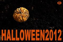 ... HALLOWEEEN2012 (*melkor*) Tags: art halloween pumpkin lights design colours shadows graphic postcard experiment mygarden flashes strobes melkor littlepumpkin freepostcard trashbit halloween2012
