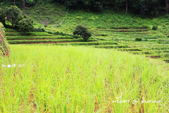 PhamonVillage-DoiInthanon-ChaengMai-Trip_By-P r i m t a a_E10886166-038