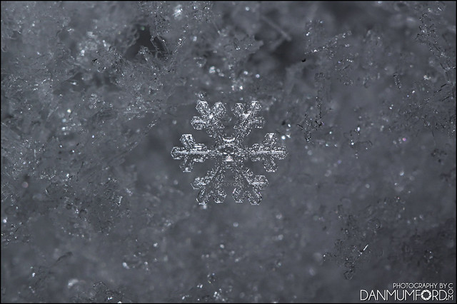 Meet the snowflake of death! The Skullflake! :-D