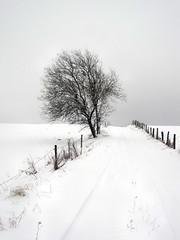 Nebel und Schnee in der Eifel - on Explore Jan. 22. 2013 # 489 (mama knipst!) Tags: schnee winter snow tree fence germany deutschland natur eifel zaun baum nettersheim