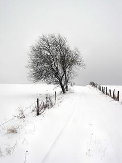Nebel und Schnee in der Eifel - on Explore Jan. 22. 2013 # 489