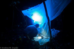 Light trapping (Andrew Snyder Photography) Tags: light southamerica nature rainforest nocturnal conservation insects bugs guyana research jungle moths tropics trap biodiversity entomology tropicalrainforest iwokrama operationwallacea opwall lighttrap guianashield andrewmsnyder reeseworthington