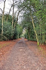 8746 (benbobjr) Tags: park uk trees england tree forest birmingham unitedkingdom path suttoncoldfield naturereserve footpath westmidlands sutton birminghamuk bridleway midlands suttonpark publicfootpath urbanpark royalforest royaltown