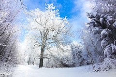 Winter Forest II (Felix Schmidt Photography) Tags: lighting wood blue trees light shadow sky sun mountains color detail tree nature colors beauty composition forest canon germany outdoors photography eos wooden focus mood photographer shadows angle outdoor pov background details perspective atmosphere sunny fisheye dreams balance exploration 8mm tones tone walimex harz saxonyanhalt 60d friedrichsbrunn